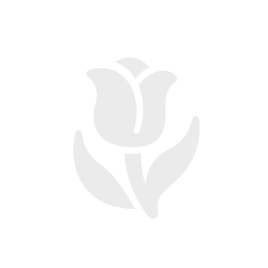 Tropical Protea Starburst